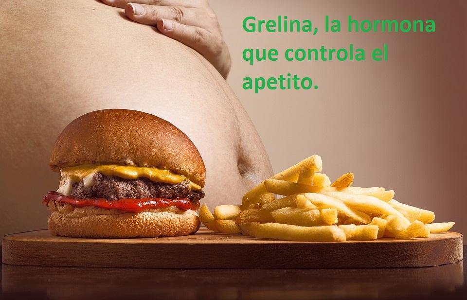 Grelina-hormona del apetito-IMOBariatrica